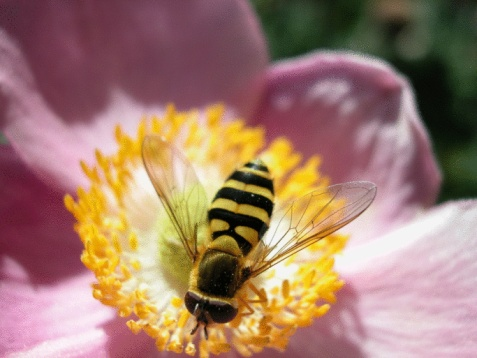 Burt's Bees test og anmeldelse